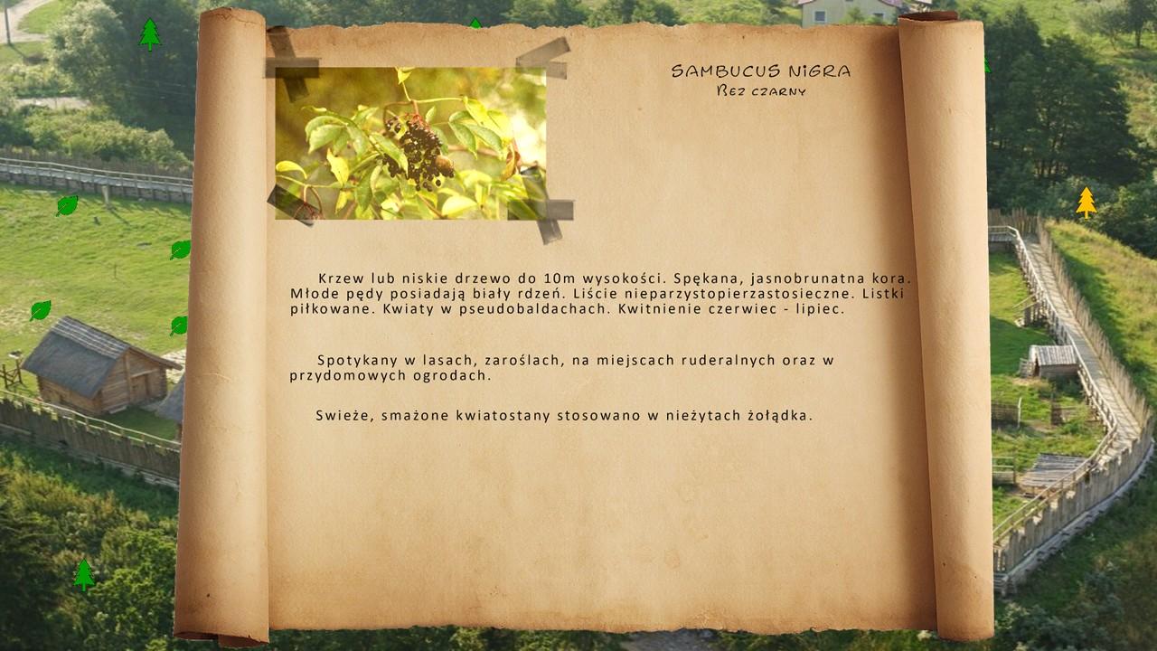Kociewskie zioła - Bez czarny