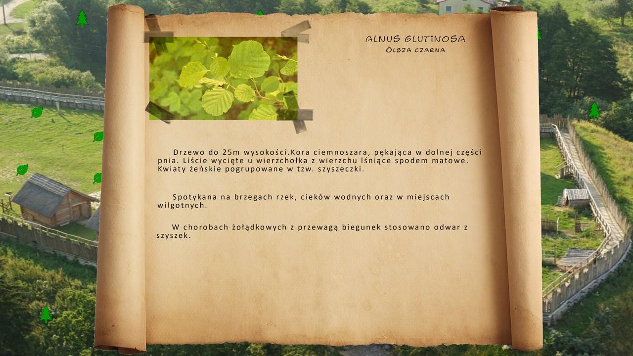 Kociewskie zioła - Olsza czarna
