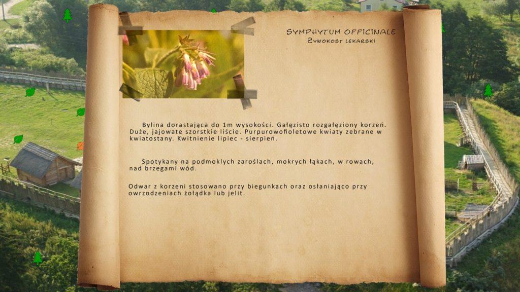 Kociewskie zioła - Żywokost lekarski