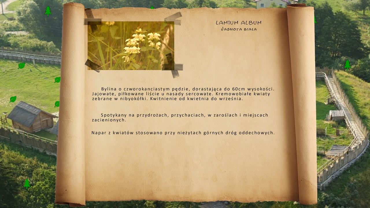 Kociewskie zioła - Jasnota biała