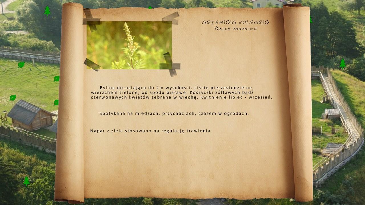 Kociewskie zioła - Bylia pospolita