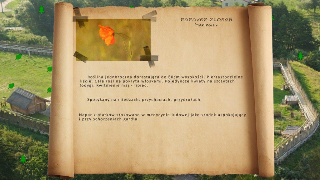 Kociewskie zioła - Mak polny
