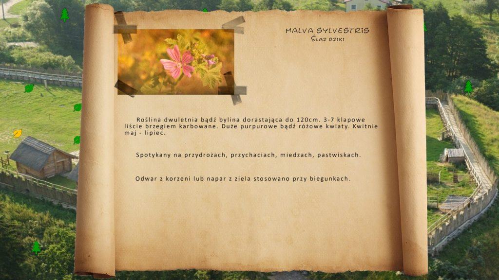 Kociewskie zioła - Ślaz dziki