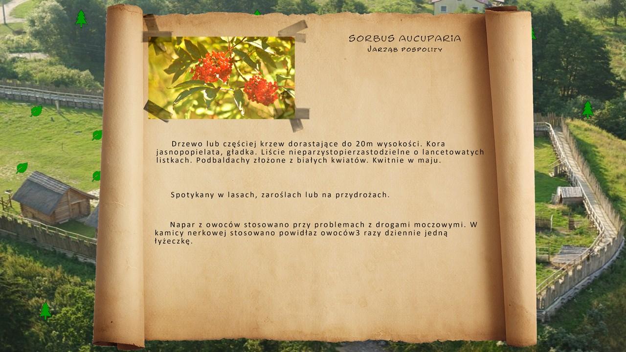 Kociewskie zioła - Jarząb pospolity