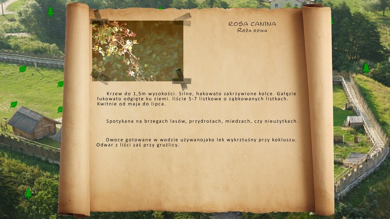 Kociewskie zioła - Róża dzika