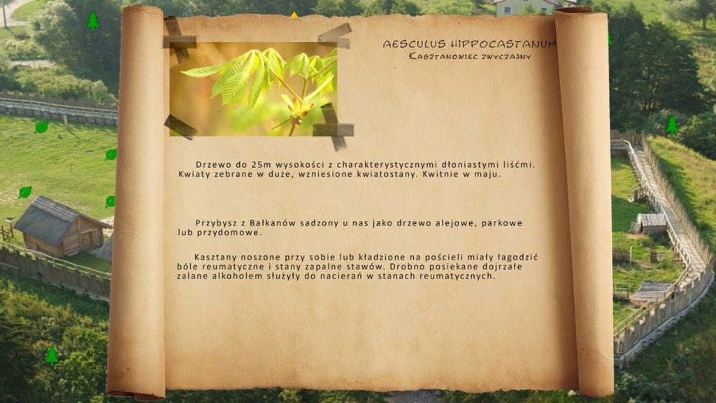 Kociewskie zioła - Kasztanowiec zwyczajny